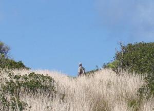 Exploring mysterious Molokai